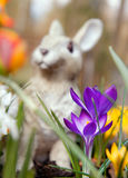 Crocus flowers and bunny sculpture Royalty Free Stock Photo