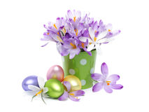 Crocus flowers and Easter eggs Royalty Free Stock Image