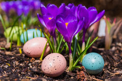 Crocus Flowers and Easter Eggs Royalty Free Stock Photos
