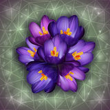 Crocus flowers. Illustration of purple crocus flowers with triangle background Royalty Free Stock Photo