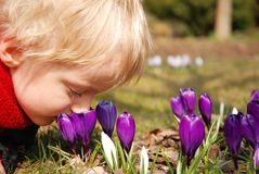 Crocus flowers and little child Stock Photography