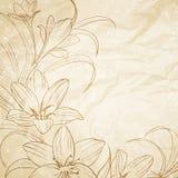 Crocus flowers. Stock Photos