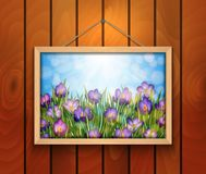 Crocus flowers in picture frame on wooden wall royalty free illustration