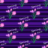 Crocus flowers pink1-01. Beautiful spring seamless pattern with pink crocuses.The flowers of saffron on a violet and black striped background.Vector illustration Royalty Free Stock Image