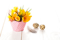 Crocus flowers with quail eggs Royalty Free Stock Image