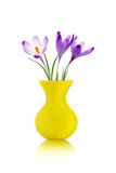 Crocus flowers in yellow vase Royalty Free Stock Image