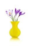 Crocus flowers in yellow vase Royalty Free Stock Image