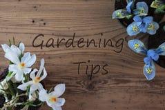 Crocus And Hyacinth, Text Gardening Tips Royalty Free Stock Photos