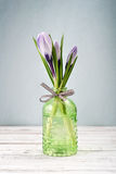 Crocus In Vases Stock Photos