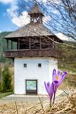 Crocus and lookout in Velke Borove, Slovakia. Violet blooming flower - Crocus. Lookout called Veža in village Velke Borove, Slovakia stock photos