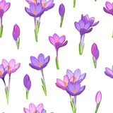 Violet purple crocus flowers seamless pattern. Crocus saffron purple violet spring flowers seamless pattern. Simple small flowers clean drawing on white Royalty Free Stock Photography