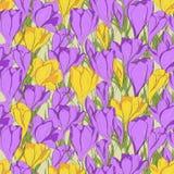 Crocus seamless patterm 1 purple yellow Stock Photography