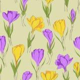 Crocus seamless patterm 3 purple yellow Royalty Free Stock Photo