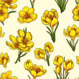 Crocus. Seamless pattern with hand-drawn flowers of crocus Royalty Free Stock Image