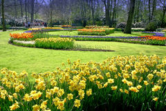 Crocus, Tulips Garden. Public Garden with Yellow Crocus, Bleu Jacinth and Yellow Red Tulips, in Netherlands stock photography