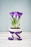 Crocus in vase Royalty Free Stock Photography