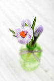 Crocus in vases Royalty Free Stock Photo