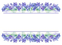 Crocus Violet Watercolor. Violet Watercolor illustration with crocus or saffron on a white background.bouquet of purple flowers.Can be used as greeting cards Stock Photos