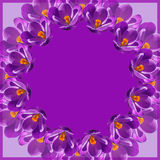 Crocus wreath Stock Photos