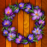 Crocus wreath on wood background. Illustration of wreath from purple crocus flowers on wood background Royalty Free Stock Photos