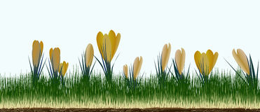 Crocuses. Newly sprouting this image will tile along it's length so you can make it as long as you want Stock Image