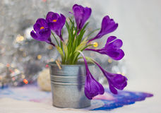 Crocuses ans bokeh Stock Photo