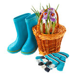 Crocuses in a basket, gloves and boots on a white background Stock Photo