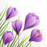 Crocuses. Five paper flowers on white background Stock Images