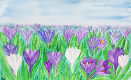 Crocuses, painting, watercolor Royalty Free Stock Photos
