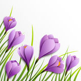 Crocuses. Paper flowers on white background Royalty Free Stock Photo