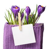 Crocuses with sheet for notes Stock Image