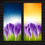 Crocuses vertical banner set Stock Photo