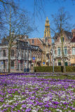 Crocusses, old houses and church tower in Groningen Royalty Free Stock Photo