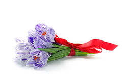 Crocusses with a red bow isolated on white. Crocus bouquet with a red bow isolated on white background Stock Images