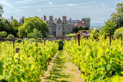 Croft Castle Vineyard, Herefordshire. Royalty Free Stock Photography