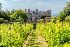 Croft Grodowy winnica, Herefordshire fotografia royalty free