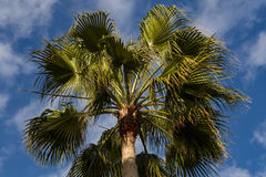 Crohn's palm against the blue sky. Cyprus Royalty Free Stock Photos