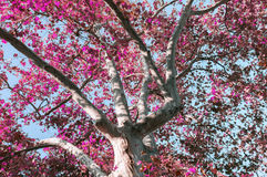 Crohn tree in the foreground. The branches of the crown of a tree with leaves of different colors Royalty Free Stock Images