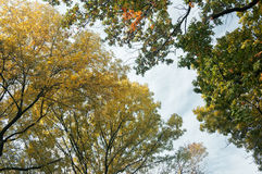 Crohn tree in the foreground. The branches of the crown of a tree with leaves of different colors Royalty Free Stock Photography