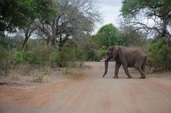 Croisement d'éléphant photo stock