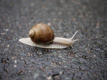 Croisement d'escargot Photo libre de droits