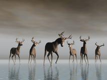 Croisement de cerfs communs illustration de vecteur