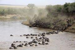 Croisement de fleuve de Mara de masai Photo stock