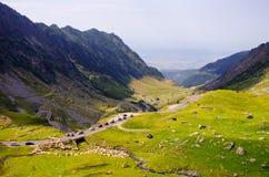 Croisement de moutons de paysage de montagnes de Transfagarasan images libres de droits