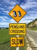 Croisement de pingouins Appareils-photo de vitesse en fonction image libre de droits