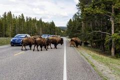 Croisement de route de Buffalo photo libre de droits