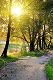 Croisement de route un paysage de forêt d'automne photographie stock