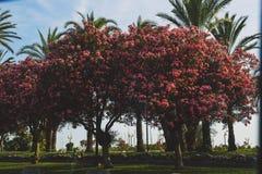 Croisette海边步行在有大量的戛纳五颜六色的flo 库存图片