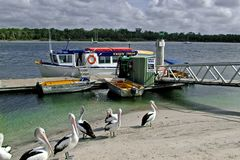 Croisière de dauphin Image stock