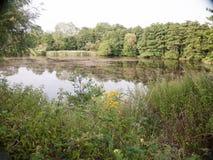 Croissance britannique de lac de région boisée avec des réflexions d'arbre d'été de feuillage Photo stock